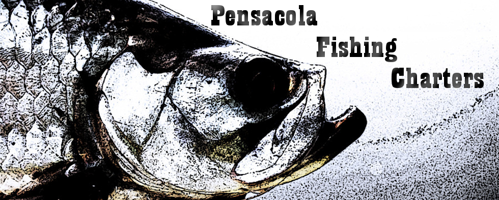 Pensacola fishing charters deep sea offshore and for Pensacola fishing forecast